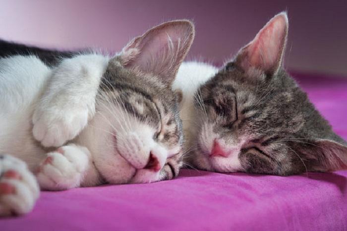 Vlyublyonnye koty na milejshix fotografiyax 1