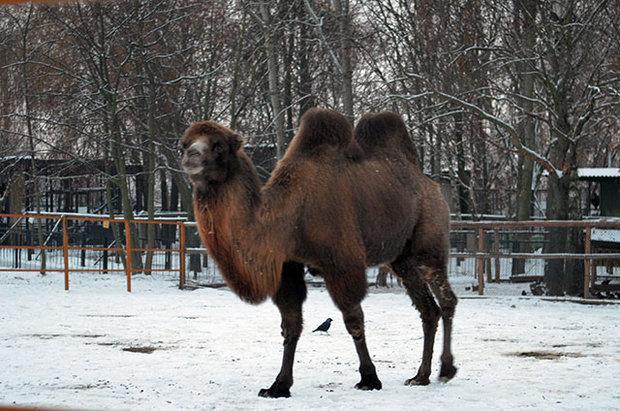 Zoopark zhivotnye minsk 2014 31 teun1