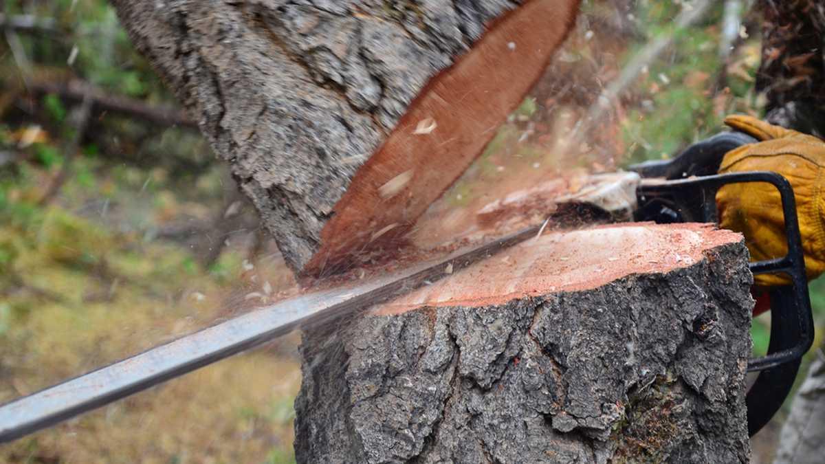 Trees cut down 1