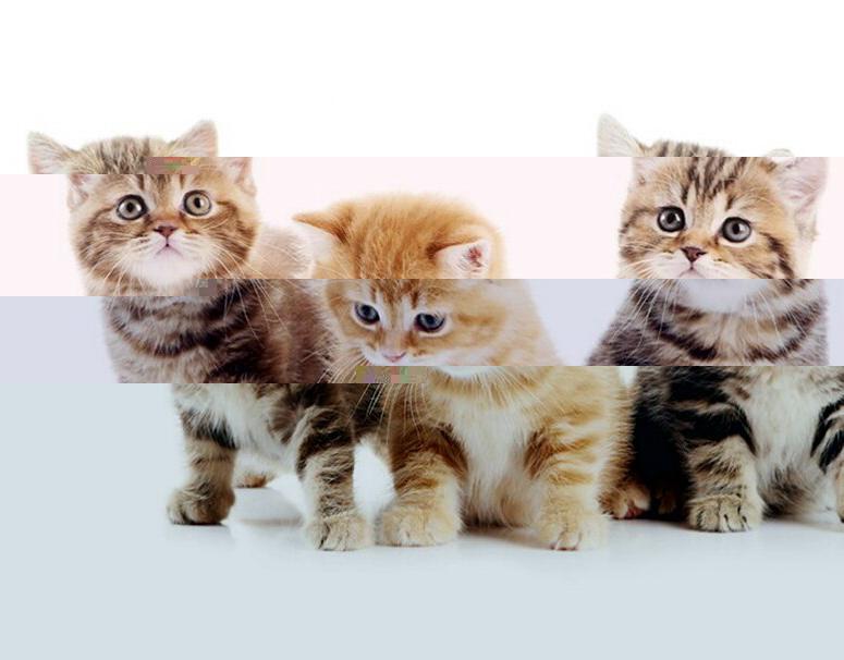 Khotiat li russkiie kotiat zoosad tatiany zamirovskoi