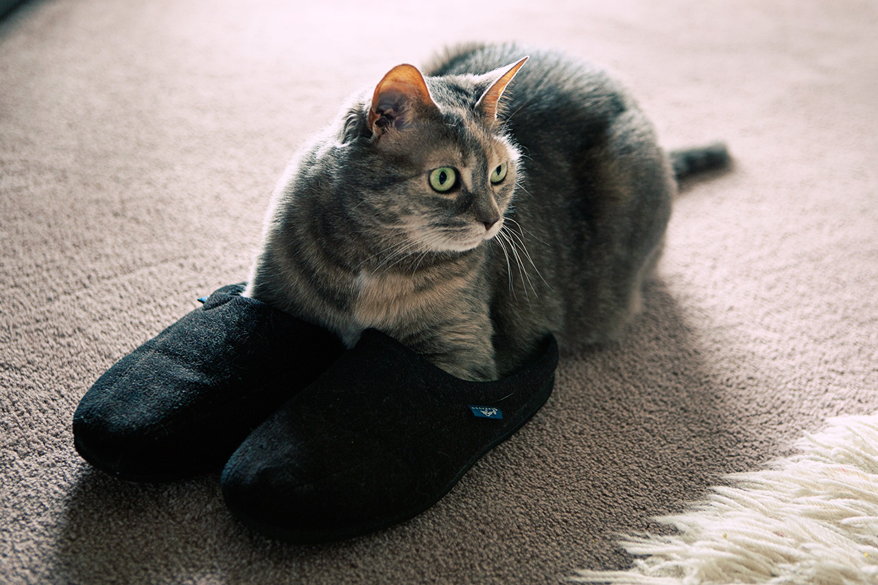 Dolly in slippers