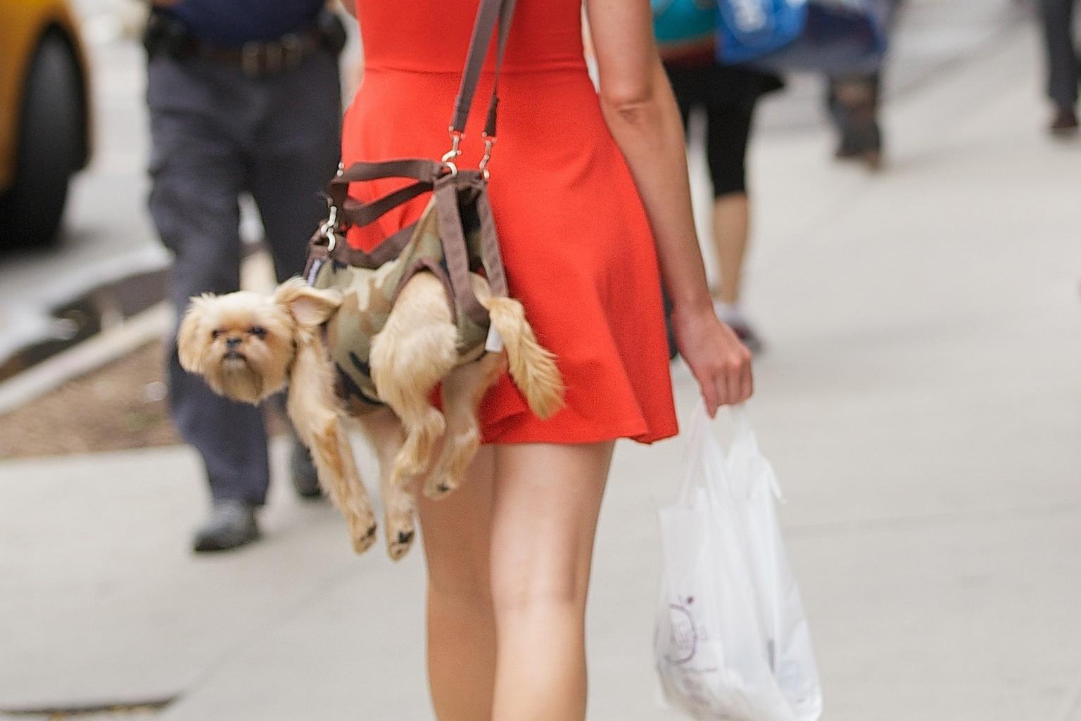 O puppy purse facebook