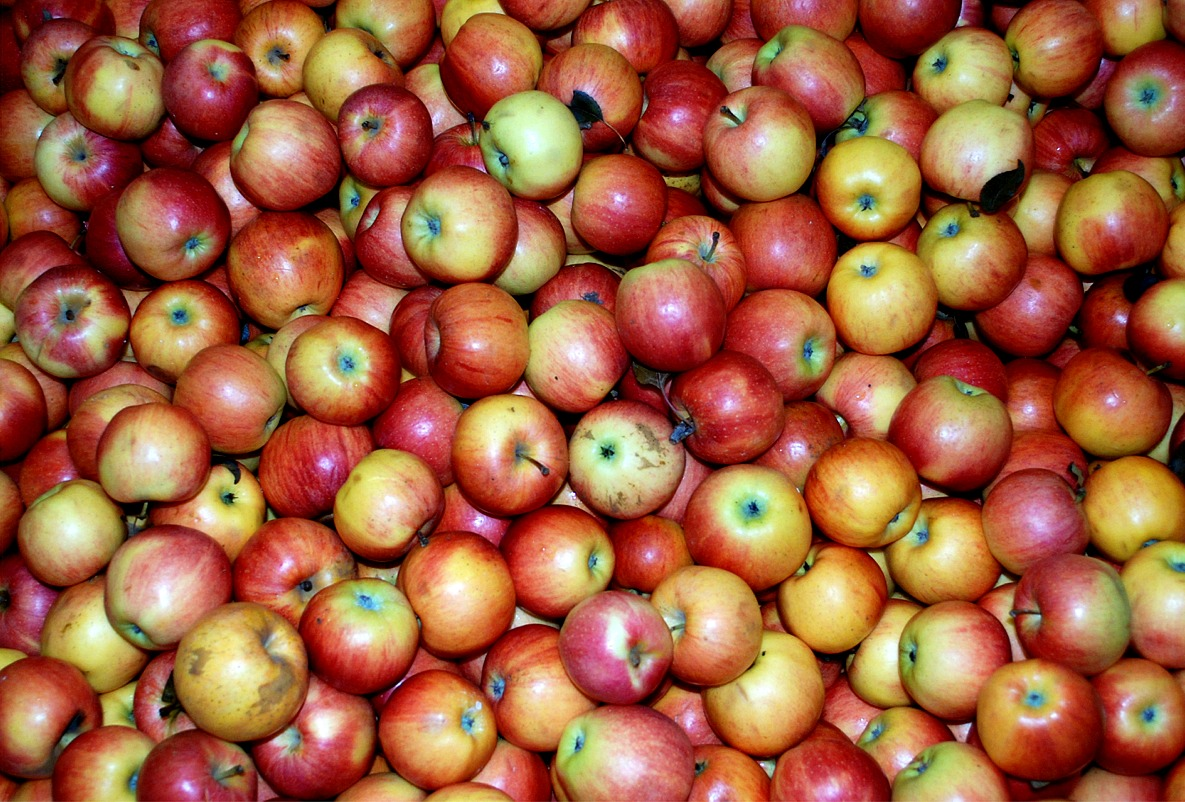 Apples for fat loss diet routine