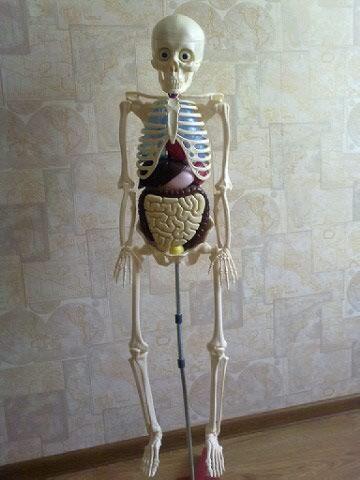 как собрать скелета артема инструкция - фото 2