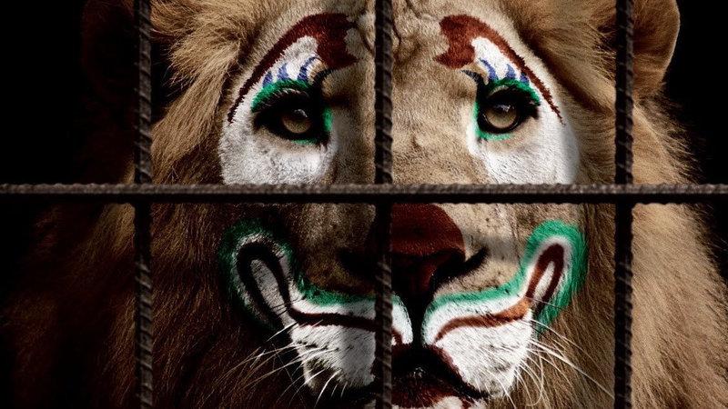 Картинки по запросу В Беларуси запретят цирки с животными? Власти прислали ответ