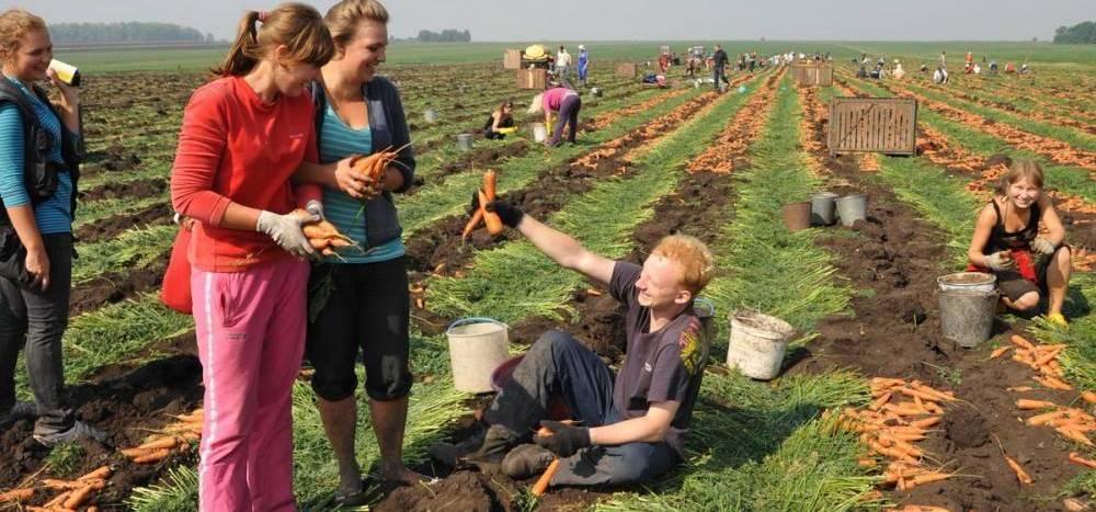 Секс студенты на уборке урожая