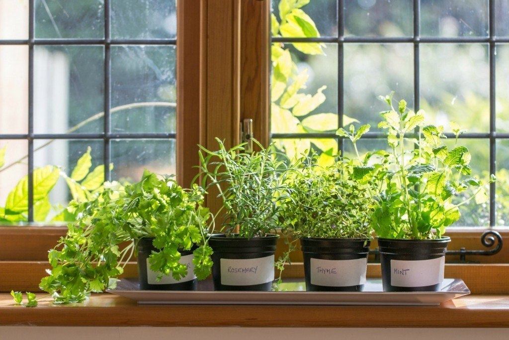 Window sill herb garden 1024x683
