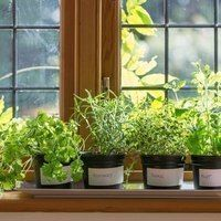 Thumb window sill herb garden 1024x683