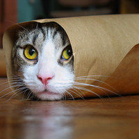 Thumb kitty paper roll