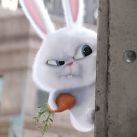 Thumb the secret life of pets rabbit angry wallpaper